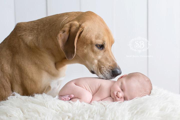 Baby Boy in Kelowna Studio with Puppy Friend