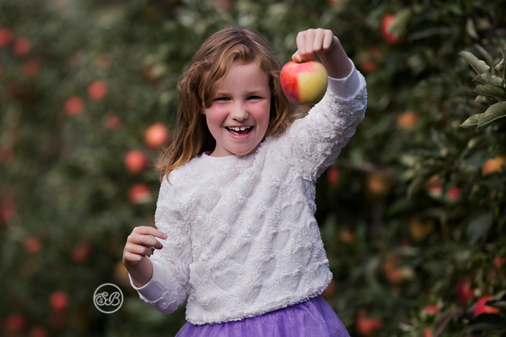 Sierra Marketing {Ambrosia Apples Canada}